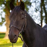 20170909 Morgan Horses
