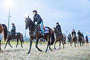 November 1-3, 2018: Breeders' Cup Horse Racing World Championships. Sergei Prokofiev