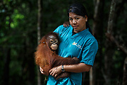 Mae Sumarnae, Animal Welfare Assistant Manager, holds a baby orang-utan in the nursery at Nyaru Menteng Rehabilitation Centre, run by the Borneo Orangutan Survival Foundation, in Central Kalimantan, Borneo, Indonesia on 27th May 2017. Baby orang-utans are rescued from situations including being illegally kept as pets and being orphaned by loggers or workers on palm oil plantations. During their rehabilitation process their contact with humans is kept to a minimum, but initially they are assigned a babysitter who acts as a sort of surrogate mother. The centre houses around 450 rescued orangutans who have been displaced from their habitats by human activity, most of whom will be released into the wild after learning how to live independently.