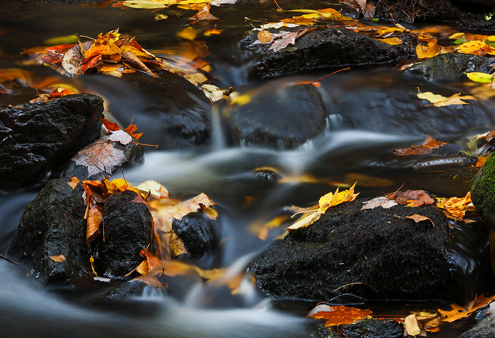 Rushing cascade downstream of the Bear's Den outside of New Salem, MA in Franklin County.    <br /> <br /> Western Massachusetts cascade photography images are available as museum quality photography prints, canvas prints, acrylic prints or metal prints. Prints may be framed and matted to the individual liking and decorating needs at:<br /> <br /> https://juergen-roth.pixels.com/featured/autumn-farewell-juergen-roth.html<br /> <br /> All high resolution New England photography images from around all six states are available for photo image licensing at www.RothGalleries.com. Please contact me direct with any questions or request. <br /> <br /> Good light and happy photo making!<br /> <br /> My best,<br /> <br /> Juergen<br /> Prints: http://www.rothgalleries.com<br /> Photo Blog: http://whereintheworldisjuergen.blogspot.com<br /> Instagram: https://www.instagram.com/rothgalleries<br /> Twitter: https://twitter.com/naturefineart<br /> Facebook: https://www.facebook.com/naturefineart