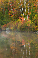 Peak autumn color in Groton State Forest, Vermont, USA