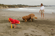 A woman and toddler play with a golden retriever at the beach near Crescent City, California