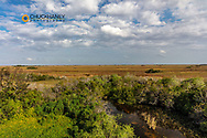 View of the vast wetland from Shark Valley Observation Tower in Everglades National Park, Florida, USA
