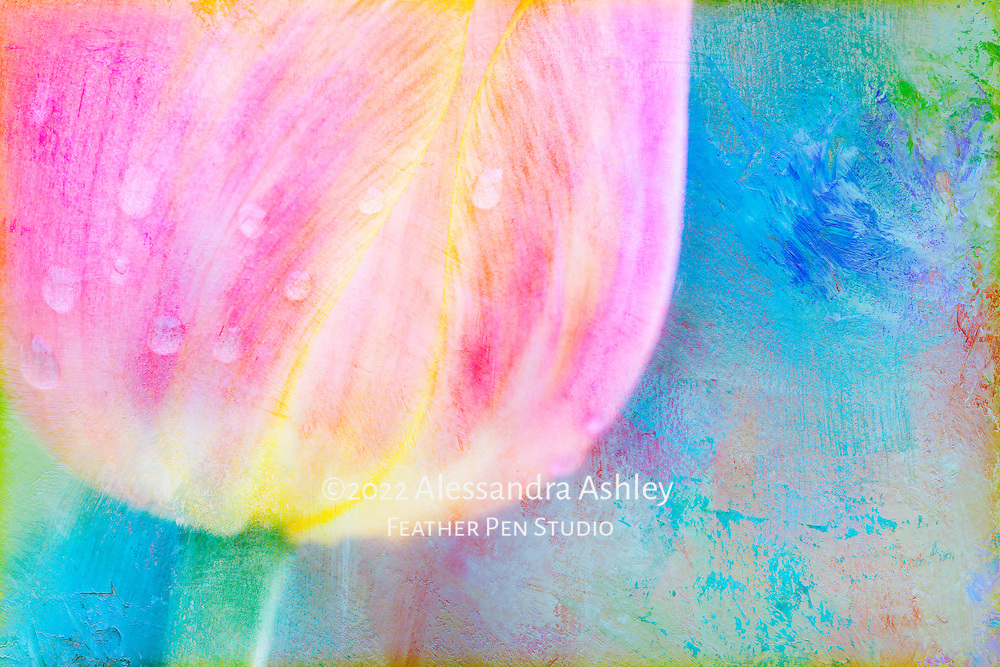Peach and yellow late-flowering tulip after a rainshower, combined with painted texture in pastel colors.