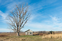 A flock of birds flew out of the tree as I stopped to shoot this little abandoned house near St Xavier.