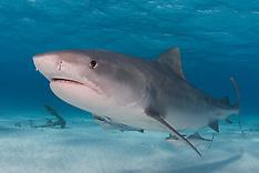 Bahamas Marine Life