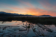 Beaver pond at the mouth of the Elwha River where it meets the Strait of Juan de Fuca. W of Port Angeles, WA.
