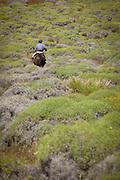 Gaucho riding through shrubbery, Estancia Huechahue, Patagonia, Argentina, South America