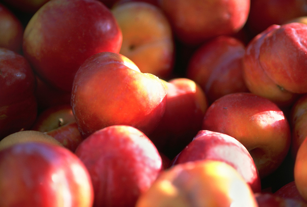 Close up selective focus photograph of a group of Victoria Plums