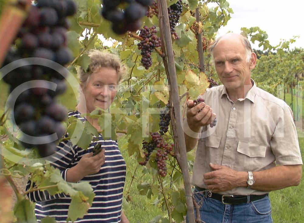 Fotografie Frank Uijlenbroek©2001/Frank Brinkman.010912 ommen ned.fam teelt druiven voor het maken van streekwijn.