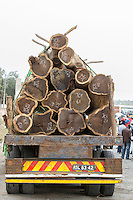 Harvested hard-wood logs loaded on a large truck and en-route for export, Save River Bridge, Inhambane Province, Mozambique