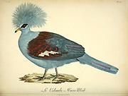 Colombi-hocco from the Book Histoire naturelle des oiseaux d'Afrique [Natural History of birds of Africa] Volume 6, by Le Vaillant, Francois, 1753-1824; Publish in Paris by Chez J.J. Fuchs, libraire 1808
