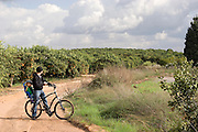 Orange orchard Photographed in Israel