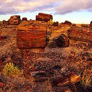 Petrified logs in Petrified Forest National Park, AZ.