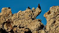 Birds on a Tufa. Mono Lake, South Tufa Area. Image taken with a Nikon D3 camera and 200 mm f/2 lens + 2.0 TCE (ISO 200, 400mm, f/11, 1/640 sec).