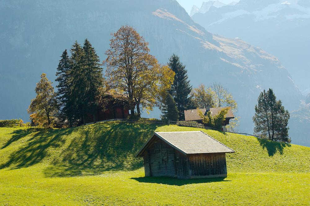 Alpine Pasture with cow shed - Grinderwald - Alps - Switzerland