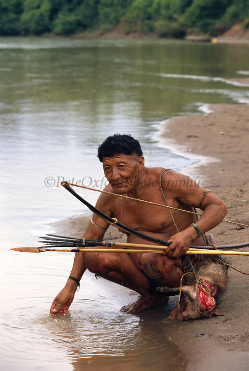 Yaminahua Indian and Hunted Peccary<br />Boca Mishagua River<br />Amazon Rain Forest,  PERU.  South America<br />'only contacted in 1988'