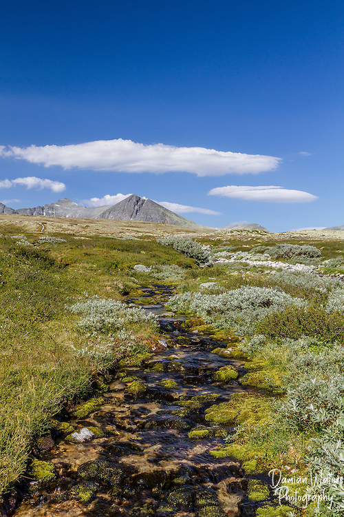 Stream at Rondane National Park, Norway - August