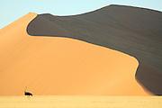 Am Rande der berühmten roten Sanddünen von Sossusvlei liegen grasbedeckte Ebenen, die nur nach den sehr seltenen Regenfällen ergrünen. Strauße (Struthio camelus) und andere große Pflanzenfresser Namibias können hier beobachtet werden. | Ostrich (Struthio amelus) Sesriem Sossusvlei sand dune