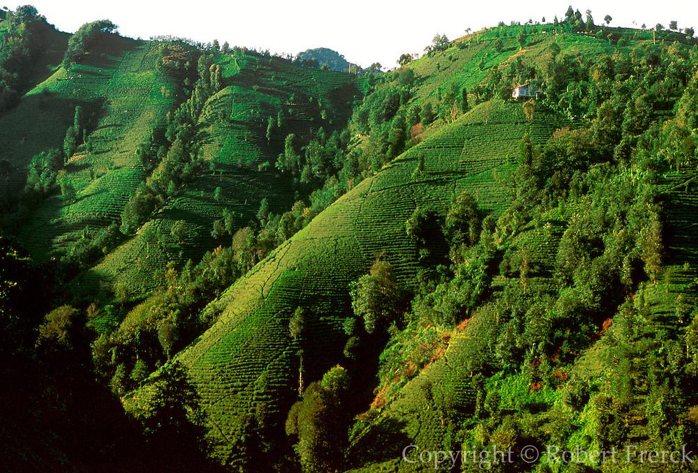 TURKEY, AGRICULTURE Tea plantations on steep terraced fields along the coast of the Black Sea near Rize; Turkey's main tea producing area