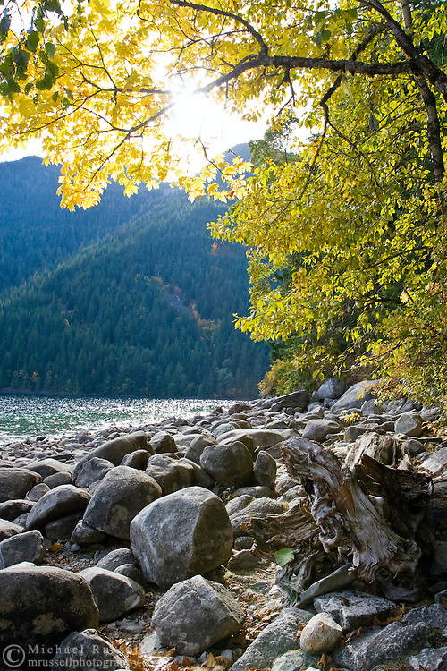 Sun shines through the Maple trees on a fall afternoon at Chilliwack Lake Provincial Park.