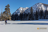 Cross Country skiing onthe Bannock Trail in Yellowstone National Park, Montana, USA  MR