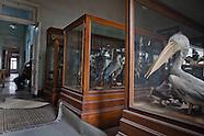 Egyptian Entomological Society