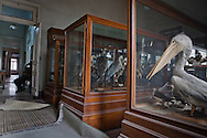 Stuffed birds on display near Tahrir Sqaure in an colonital buidling that is home of the Egyptian Entomological Society is one of Cairo's obscure tourist sites. The natural history collection of the Egytian Entomolgolical Society is free to the public included insects and birds.