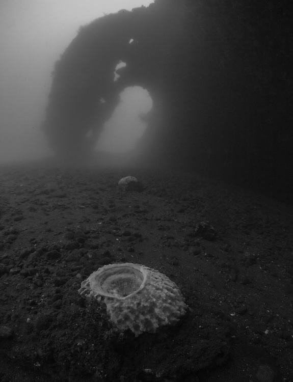 INDONESIA. Tulamben, Bali. July 1st, 2013. A medium sized barrel sponge  lays under the stern of the USS Liberty Wreck.