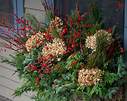 Autumn window evergreens berries hydrangeas Mulberry Street Interior Design and Northwoods Decor Shop. Cable Wisconsin WI USA