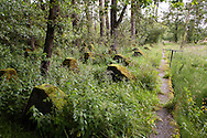 Europa, Deutschland, Nordrhein-Westfalen, Panzersperren des Westwall bei Simmerath-Paustenbach in der Eifel.  <br /> <br /> Europe, Germany, North Rhine-Westphalia, tank traps of the Siegfried line in Simmerath-Paustenbach, Eifel region.