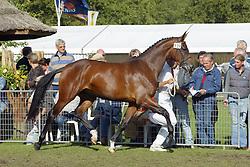 339-Ursula<br /> KWPN Paardendagen Ermelo 2004<br /> Photo © Hippo Foto
