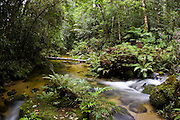 Windmill Creek at Mount Lewis State Forest in the Daintree Rainforest, Queensland, Australia