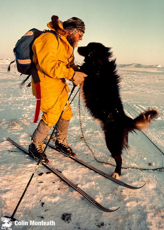 Husky jumps up on skir, Scott Base, Ross Island, Antarctica.