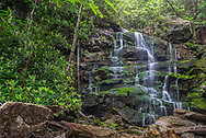 Downstream view of the waterfall of Falls Run, surrounded by Rhododendron and vibrant greens as it descends into the canyon of Blackwater River State Park in West Virginia.
