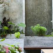 Fort Greene Modern Garden