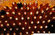 Bottles of sauternes stacked hig, shining golden in the cellar light Chateau de Cerons (Cérons) Sauternes Gironde Aquitaine France