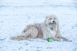 © Licensed to London News Pictures. 14/01/2015.  Moseley, Birmingham.  Hepsy the dog enjoys the snow in  in Moseley Bog this morning.  Forecasters have predicted a week of snow and frost  across the West Midlands over the next 7 days.    Photo credit : Alison Baskerville/LNP