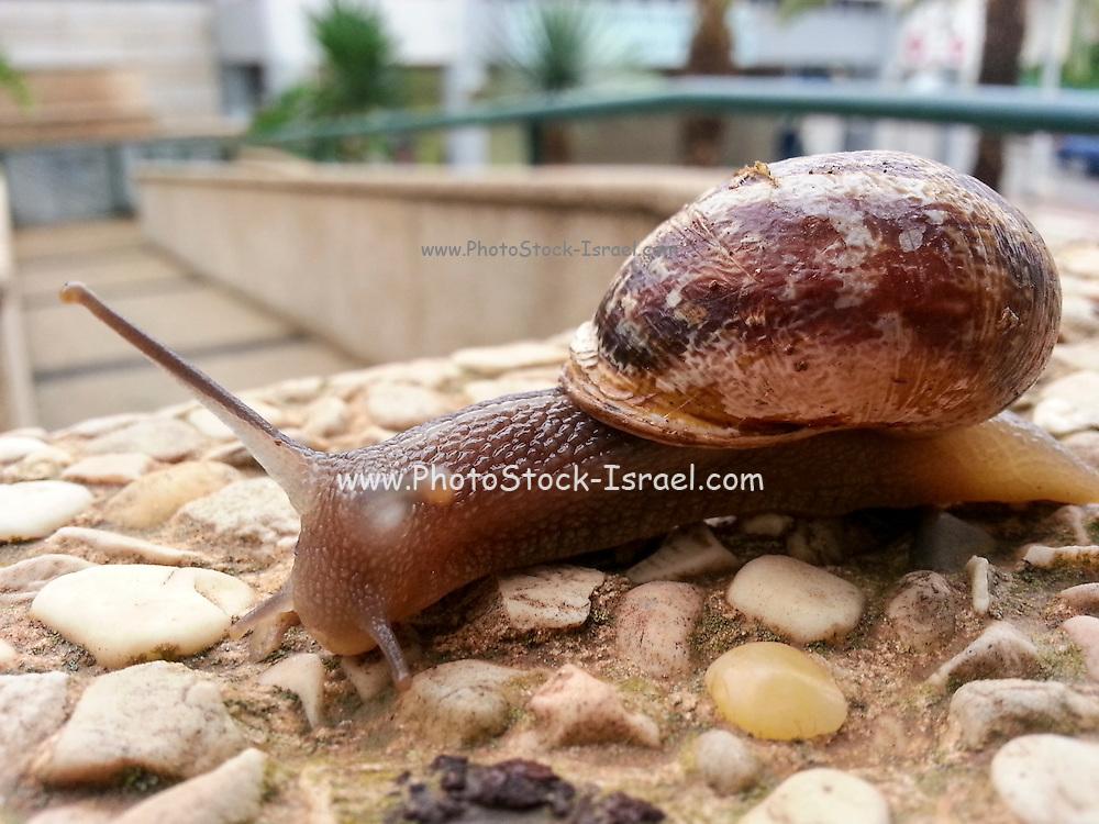 Snail crawls on a rock