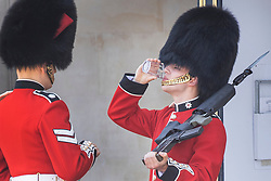© Licensed to London News Pictures. 25/06/2020. London, UK. A member of The Coldstream Guards, on duty at Buckingham Palace, is given a drink of water during the extreme heat of the afternoon. High temperatures and sunshine are expected in most of the UK over the next few days. Photo credit: Peter Macdiarmid/LNP