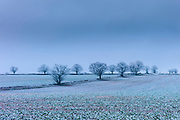 Hoar frost on trees and fields in frosty wintry landscape in The Cotswolds, Oxfordshire, UK
