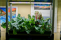 AeroGarden Farms 09 Left and Right (33 Days). L01-L06 Broccoli (Botanical Interests); L07-L12 Cauliflower (Botanical Interest); R01-R06 Swiss Chard (Botanical Interest); R07-R12 Arugula (Botanical Interests). Image taken with a Leica TL-2 camera and 35 mm f/1.4 lens (ISO 250, 35 mm, f/8, 1/80 sec).