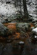Spring outflow rich with iron oxidizing bacteria  next to River Līgatne, near Nītaure, Vidzeme, Latvia Ⓒ Davis Ulands   davisulands.com