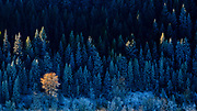 A fall mornig in the Kootenai National Forest, Montana.