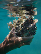 Giant clam. Man named Tobel fishing for coral fish, giant clams and scallops, off Boheydulang island.