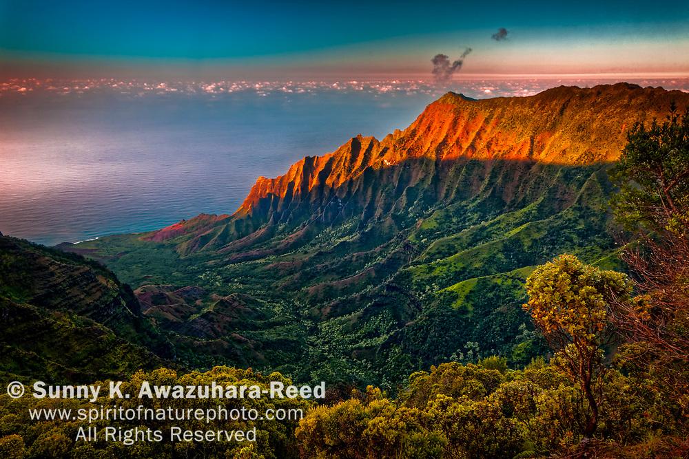 View of Na Pali Coast and Kalalau Valley from Pu'u O Kila Lookout. Sunset glow on the rugged cliff. Koke'e State Park, Kauai, Hawaii.