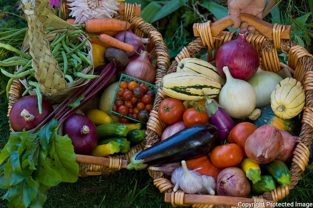 Lively Organic Farm, Eugene, Oregon