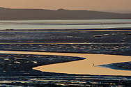 Bird in channel in the tidal mud flats at sunset, near Baywood Park, Morro Bay, California