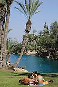 Gan Hashlosha National Park, Naturbadesee, Palmen, Jisraeltal, Israel.|.Gan Hashlosha National Park, lake, palm trees, Jisrael Valley, Israel.