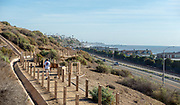 Man Walking His Dog on Sea Summit Trail Along PCH in San Clemente